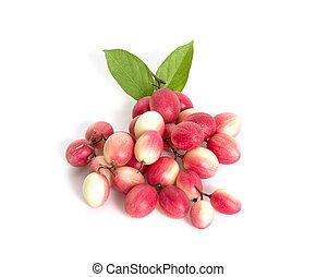 Carissa carandas Linn or Bengal currants, Karanda ,Carunda ,Karonda ,Koromcha fruits an isolated on white background