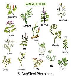 Carminative herbs. Hand drawn set - Carminative herbs. Hand...
