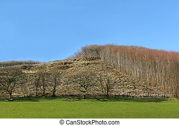 Carnage of the Forest - Hillside with areas of forest cut...