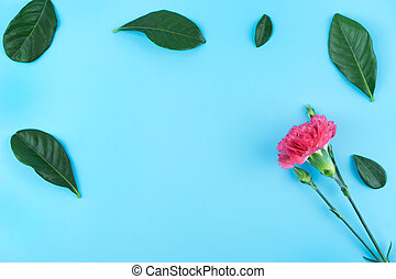 Carnation flower and green leaves with copy space on blue background.