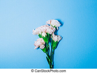 Carnation flower isolated on blue background