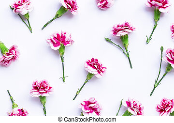 Carnation flower on blue background.  Top view