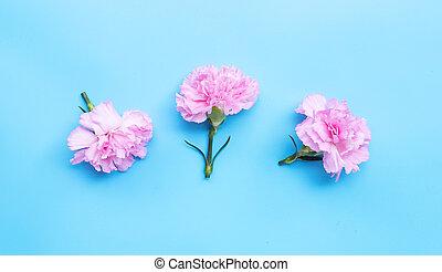 Carnation flower on blue background.