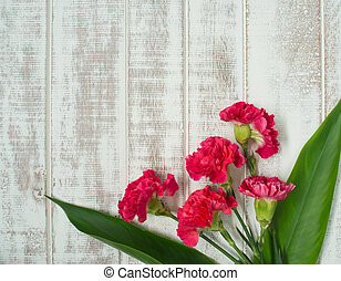 carnation flower on white background