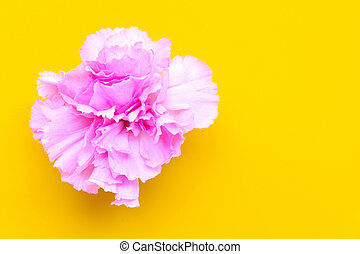Carnation flower on yellow background.  Top view