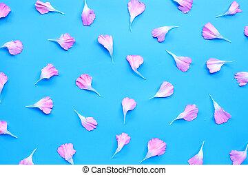 Carnation flower petals on blue background.