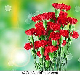 carnation flower - Close up of carnation flower