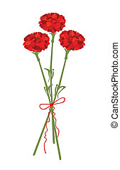 A vector illustration of carnation flowers