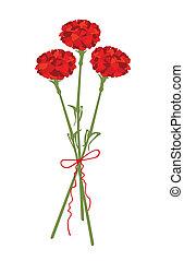 Carnation flowers - A vector illustration of carnation...