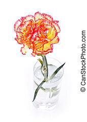 Carnation in Glass