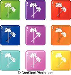 Carnation set 9