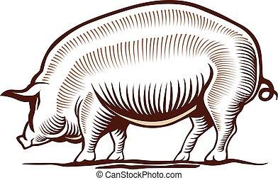 carne di maiale, disegno, mano, illustrazione, maiale