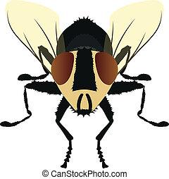 carne, ilustración, mosca