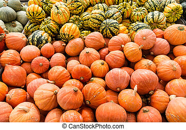 Carnival and golden nugget squash on display at the market
