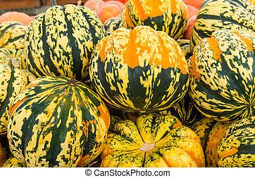 Carnival squash colorful display at market - Carnival winter...