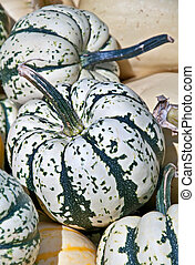 Carnival Squash Striped Green and White - This closeup is of...