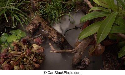 carnivorous plant in the garden