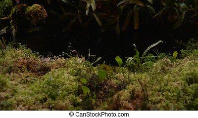 Carnivorous plants sundew, venus flytrap, sarratseniya