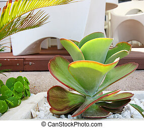 carnoso, hojas, planta verde