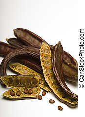 Carob (Ceratonia siliqua) isolated on white background