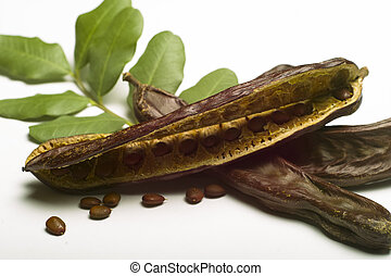 Carob (Ceratonia siliqua) with leaf