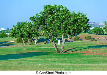 Carob tree (Ceratonia siliqua) and golf field, Paphos,...