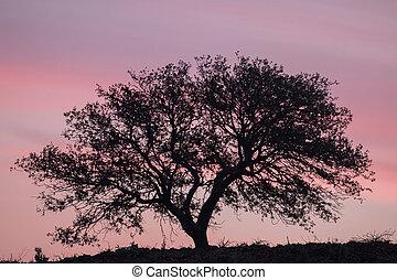 Carob Tree silhouette