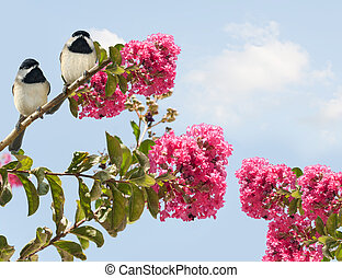 Two adorable chickadees perched in a crape myrtle tree in bloom