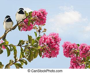 Carolina Chickadees poecile carolinensis in a Blooming Crape...