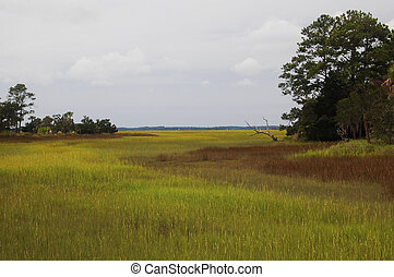 Carolina Marsh Grass