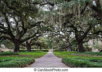 Carolina Spring - Century old Live Oaks draped in Spanish...