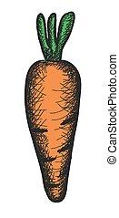 carota, scarabocchiare, illustrazione, vettore