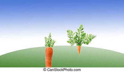 CArotes - Carottes , grande , petite , taille ,