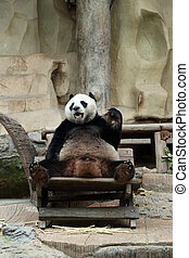carotte, manger, ours panda