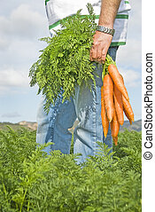 carotte, paysan, dans, a, champ carotte, sur, a, ferme