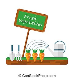 carottes, lit