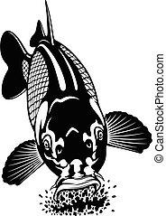 Carp eats food - Carp fish isolated on white background. Design element for logo, label, emblem, sign, brand mark.
