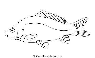 carp - fish, colorful, sea, lake, fishing, aquarium, lake