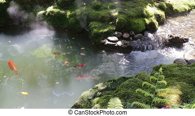 Carp fish pond in minimal green garden