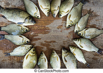 carp on a wooden background,