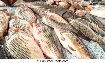 Morning catch of fish. Useful seafood. - Carp, sturgeon and...
