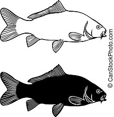 Black and white illustration carp, isolated vector