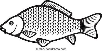 carpa, (common, fish, carp)