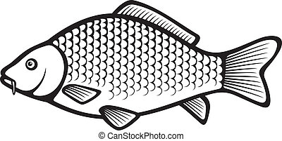 carpa, (common, peixe, carp)