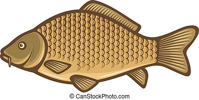 carpa, (common, pez, carp)