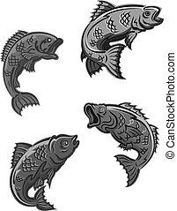 carpa, peixe, poleiro, baixo