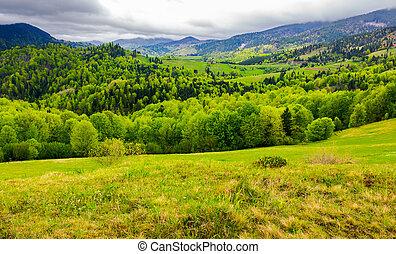 carpathian, área rural, en, primavera