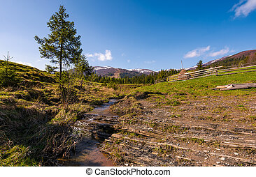 Carpathian alpine countryside in springtime. Spruce tree...
