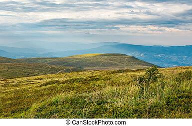 Carpathian alpine meadows in august. lovely summer landscape...