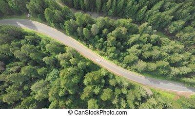 carpathian, autoroute, pentes, il, boisé, montagnes, ...